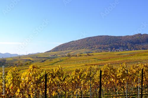 Aluminium Wijngaard Blick über Weinberge im Herbst