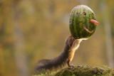 squirrel stands behind  watermelon mask - 174692131