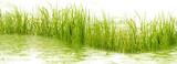 herbes aquatiques  - 174707514