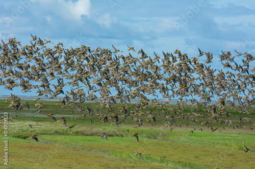 Tuinposter Noordzee Zugvogelschwarm an der Nordsee