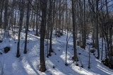 Beech or fagus forest  on winter time in Vitosha mountain, Bulgaria   - 174715984