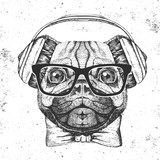 Retro Hipster animal pug-dog. Hand drawing Muzzle of pug-dog - 174730192