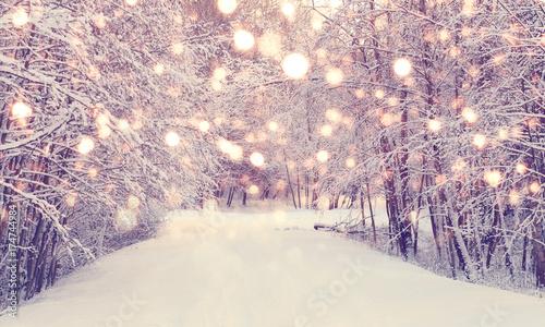 Bożenarodzeniowy opad śniegu w parku