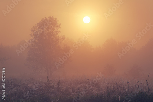 Tuinposter Herfst Autumn foggy morning