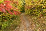 Autumn Hiking Trail In The Woods - 174751571