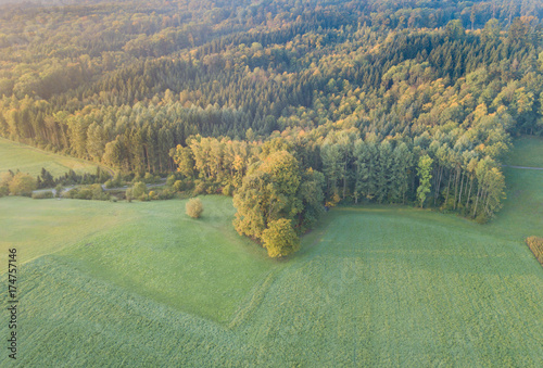 Fotobehang Olijf Aerial view of forest in morning light during sunrise
