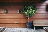 植物とウッドデッキ - 174768945