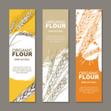 Set of vector backgrounds for label, package. Sketch hand drawn illustration of wheat ears. Concept for organic flour, harvest and agriculture, grain, cereal products, bakery, healthy food. - 174771979