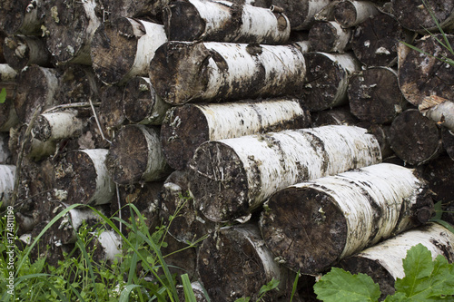 Birch logs in the grass Poster
