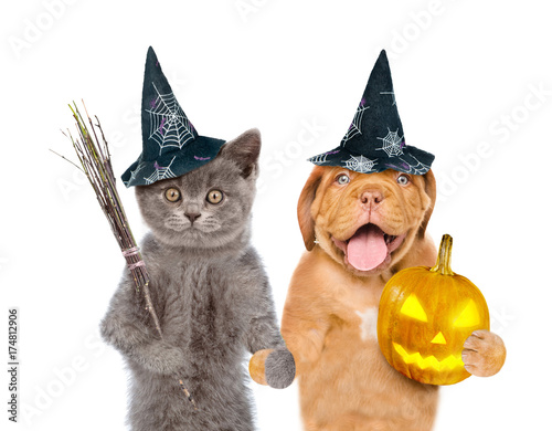 Aluminium Kat Kitten and puppy in hats for halloween with witches broom stick and pumpkin. isolated on white background