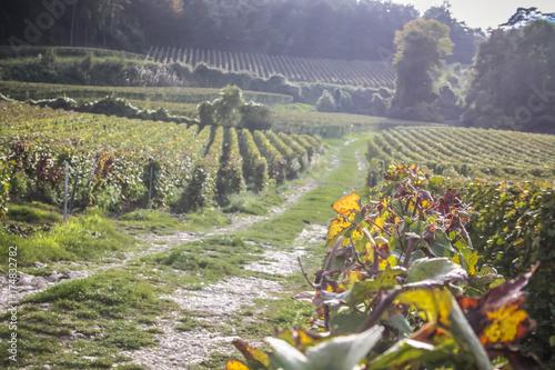 Foto op Canvas Honing Vignoble de Champagne