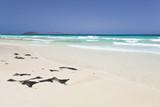 White Beach With Rocks, Fuerteventura - 174833510