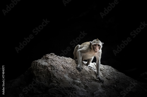 Fotobehang Aap Monkey macaque sitting on the rock in the cave