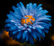 blue flower bud with orange core
