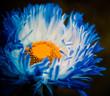 blue flower bud with orange core inside