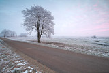 countryside road and frosted tree at sunrise - 174847101