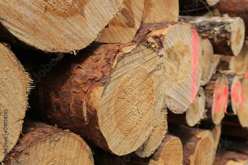 Pine Timber Log Poster
