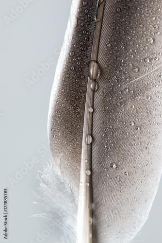 Feder im Close-Up - 174885793