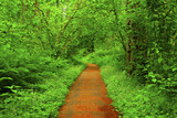 a picture of an Pacific Northwest forest trail - 174898932