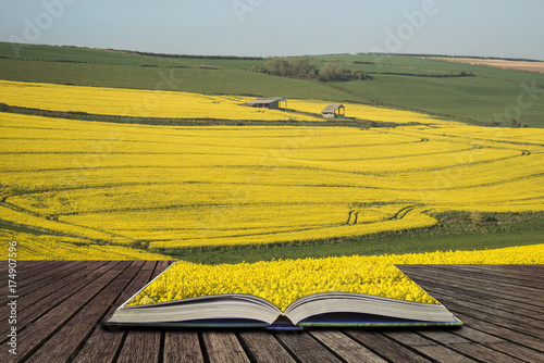 Staande foto Khaki Beautiful landscape image of ripe rapeseed canola crop in Spring in English countryside concept coming out of pages in open book