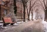 bench on longest linden alley in winter. mysterious and hazy morning with hoarfrost on the embankment of river Uzh - 174913325