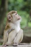 monkeys family on hill park of Phuket - 174925946