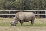 Rhino - 174934994