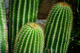 color image of cactus close-up - 174937344