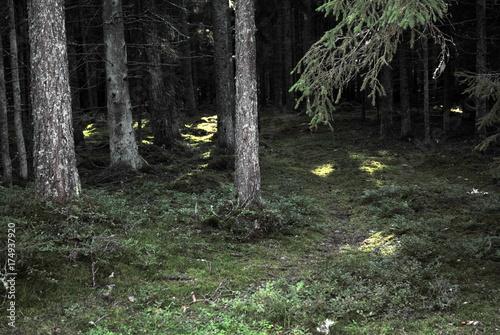 Aluminium Betoverde Bos dunkler Wald