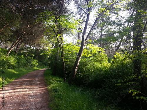 Keuken foto achterwand Weg in bos Caminho na floresta