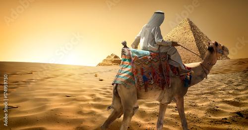 Fotobehang Kameel Camel in desert