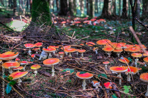 Fotobehang Betoverde Bos Fliegenpilz im Märchenwald