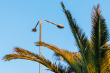 Streetlight and branches of palm on the background of clear sky - 174962980