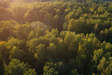 Aerial view of wild park in september at sunset time