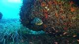 Marine life - Grouper fish in a reef - 174971759