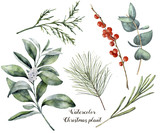 Watercolor Christmas plant and berries. Hand painted rosemary, eucalyptus, cedar, snowberry and fir branches isolated on white background. Floral botanical clip art for design or print.  - 174978998