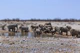 Large herd of elephants at a waterhole in Etosha - 174981997