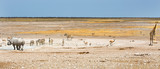 Panorama view in Etosha with various different animals at a waterhole - 174982355