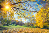 Sunny autumn landscape with golden trees and blue sky in countryside - 174989572