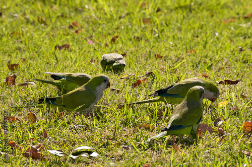 Tuinposter Palermo Green parrot