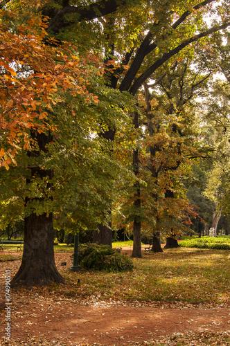Fotobehang Palermo Autumn gardens