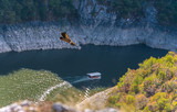 Griffon vulture flying - 174993778