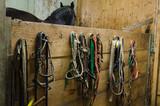horse accessories - 174995309
