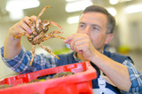 sorting the crabs - 174999137