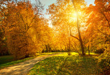 Autumn landscape - 175000741