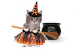 Cute Halloween Witch Themed Kitten