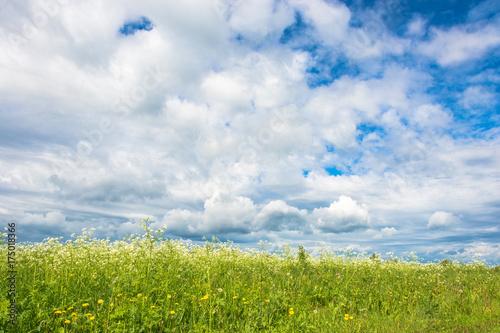 Papiers peints Bleu ciel A field of white flowers against the cloudy sky.