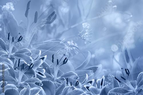 Fototapeta Floral light blue beautiful background. Flower composition of Blue flowers Lilies. Nature.
