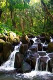 Kleiner Wasserfall im Urwald in der Nähe des Wailua River auf Kauai, Hawaii, USA. - 175029350