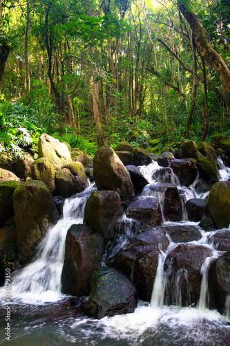 Kleiner Wasserfall im Urwald in der Nähe des Wailua River auf Kauai, Hawaii, USA.